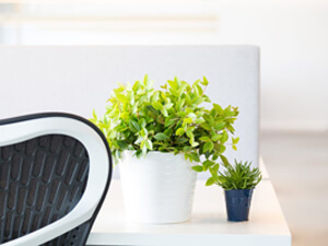 The 7 Benefits of Having Plants in Your Office